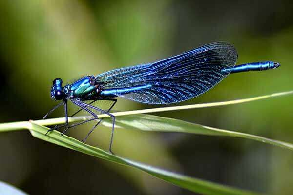 Nature Closeup - dragonfly