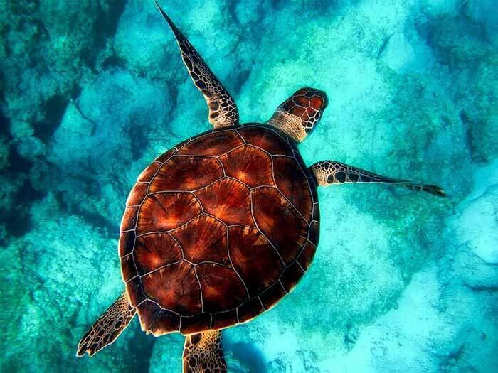 Wildlife Photography Tips sea turtle