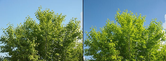 Effect of polarizing filter on trees and sky to improve the appearance of landscapes - Sky is bluer and leaves are greener - Without filter on the left - With filter on the right