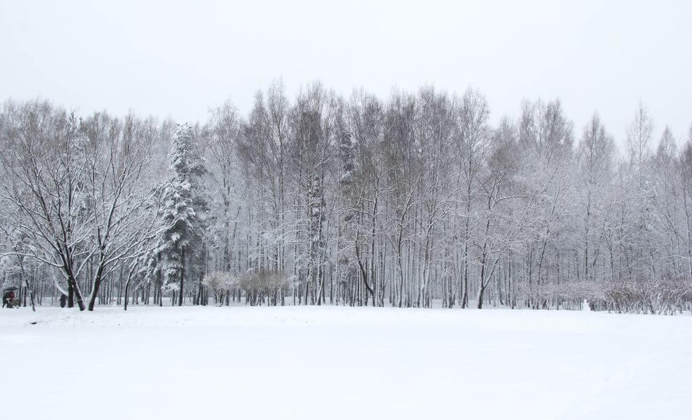 snowy landscape scene with snow covered trees lined in the background.