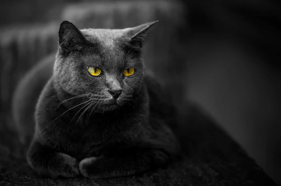 black cat with yellow eyes against dark background.