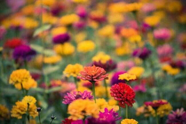 Fall Florals by Bryon Lippincott