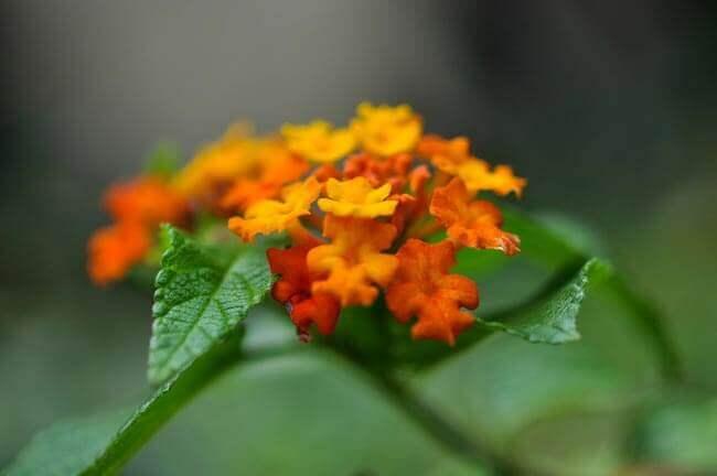 Bright and Beautiful! by peddhapati