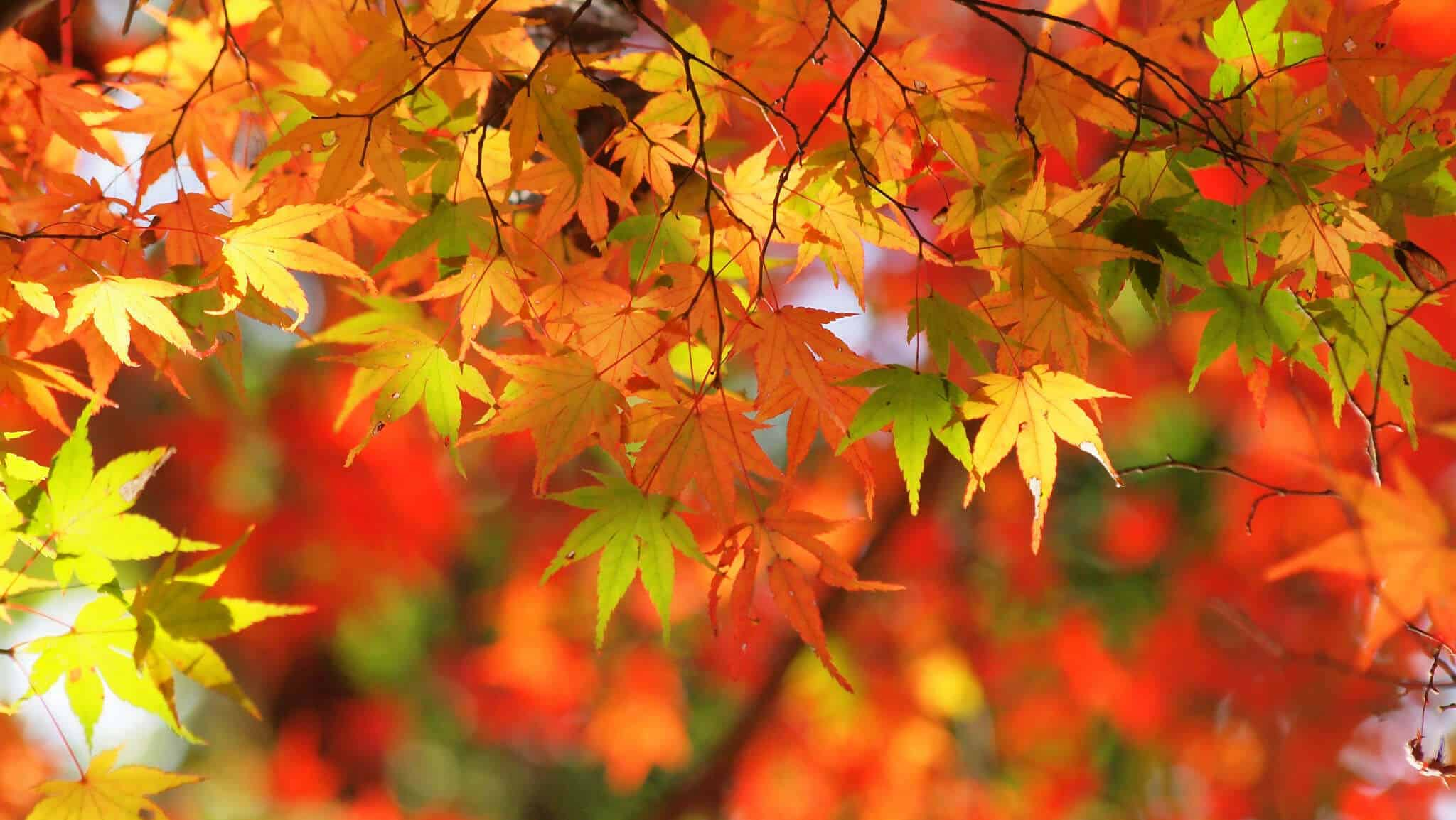 autumn photography - close up of colorful leaves