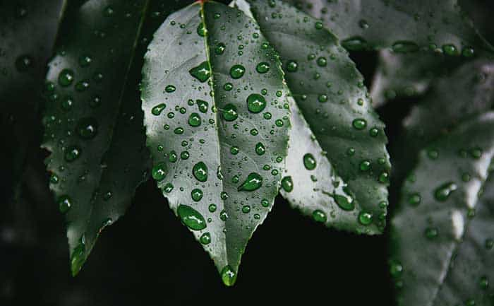 Rain Photography Tips - macro